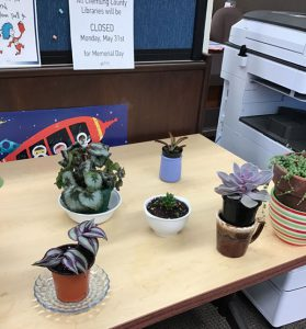 Apology photo of plants